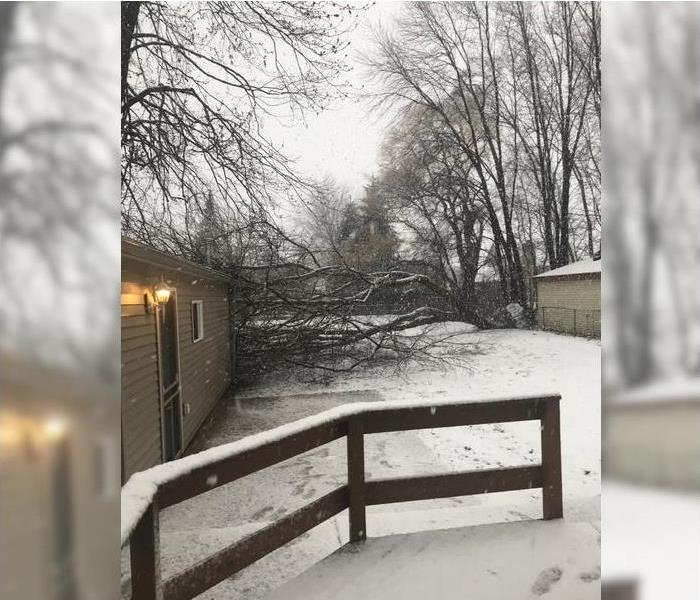 Tree Felled During Ice Storm Before