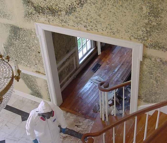 Mold Remediation Does Your Dearborn House or Business Have a Mold Problem?